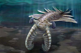 An anomalocaris, a large predator that lived in the oceans 500 million years ago.