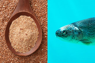 Flaxseed oil and fish oil for dry eyes for Flaxseed vs fish oil