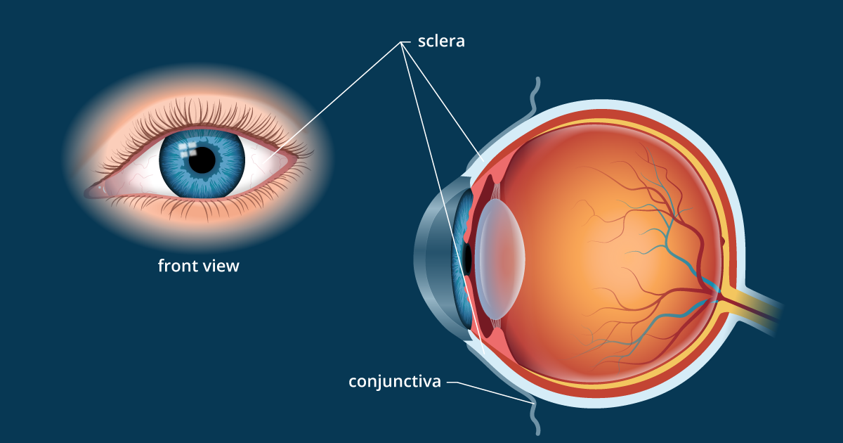 Sclera | White of the Eye - Definition and Detailed Illustration