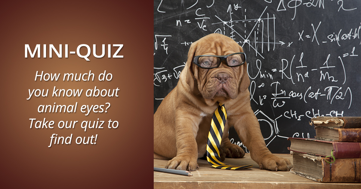 surprising animal vision facts slideshow and quiz