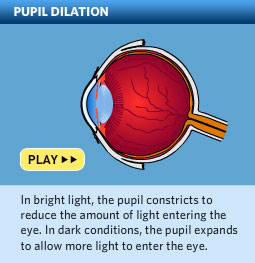 Please click here to watch a video about how pupils dilate to let light come into the eye.